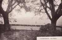 Saint Cyr sur Loire - La Béchellerie - Habitation d'Anatole France - Album Souvenir - 6 - Les tilleuls.