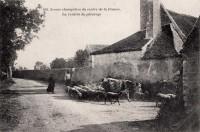 Saint Cyr sur Loire - La rentrée du pâturage - intersection rue de Palluau, rue de Charcenay.
