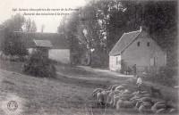 Saint Cyr sur Loire - Vallon de la Choisille - Rentrée des moutons à la ferme.