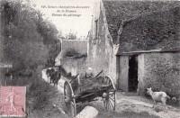 Saint Cyr sur Loire - Vallon de la Choisille - Retour de pâturage.