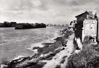 Saint Cyr sur Loire - Bords de Loire - Le Coq.