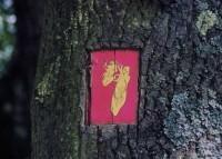 Saint Cyr sur Loire - Les collections du parc de la Perraudière - Cécile Pitois - Petits instants de la vie quotidienne de nos insectes, 2000.