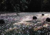 Saint Cyr sur Loire - Les collections du parc de la Perraudière - Delphine Coindet - Pelotes, 1999.